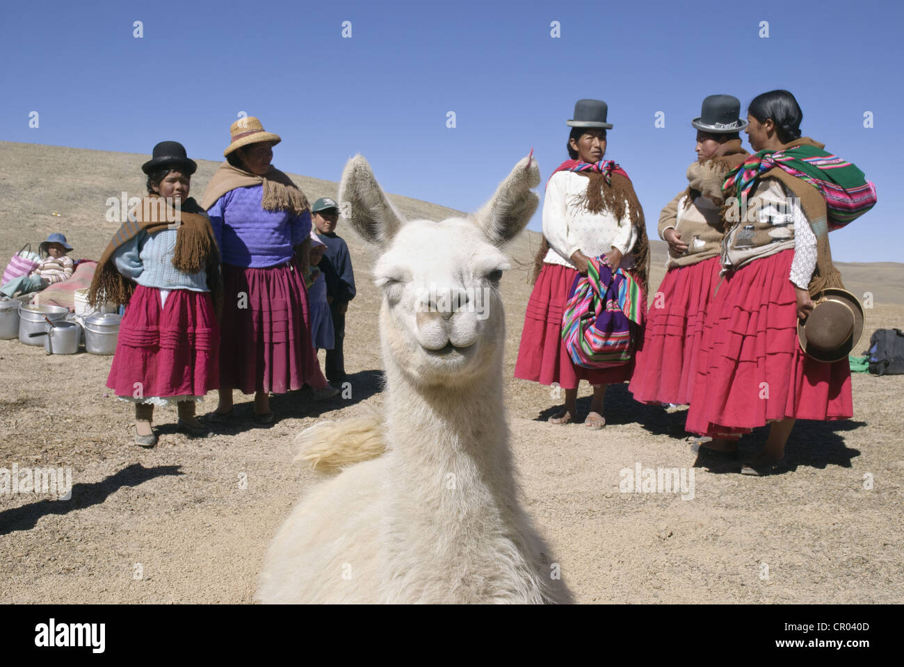 Llama sacrifice as an offering to the Pachamama - Stock Image