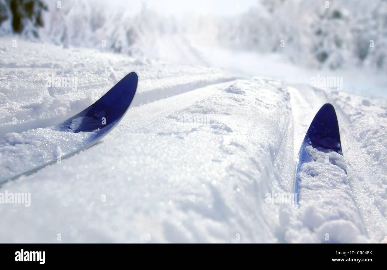 Cross Country Ski - Stock Image