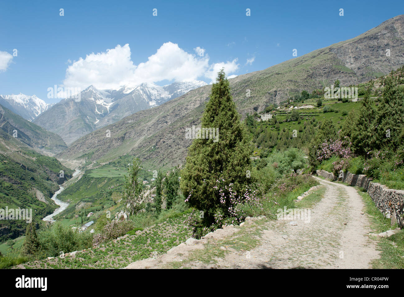 Mountain road in the green valley of Keylong, Lahaul and Spiti district, Himachal Pradesh, India, South Asia, Asia - Stock Image