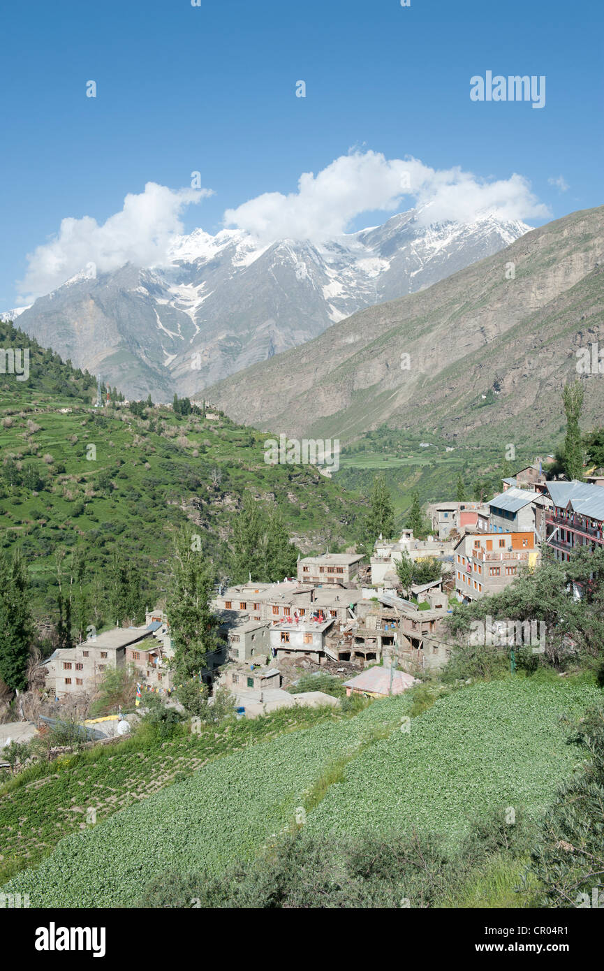 Mountain village on a green slope, Keylong, Lahaul and Spiti district, Himachal Pradesh, India, South Asia, Asia - Stock Image
