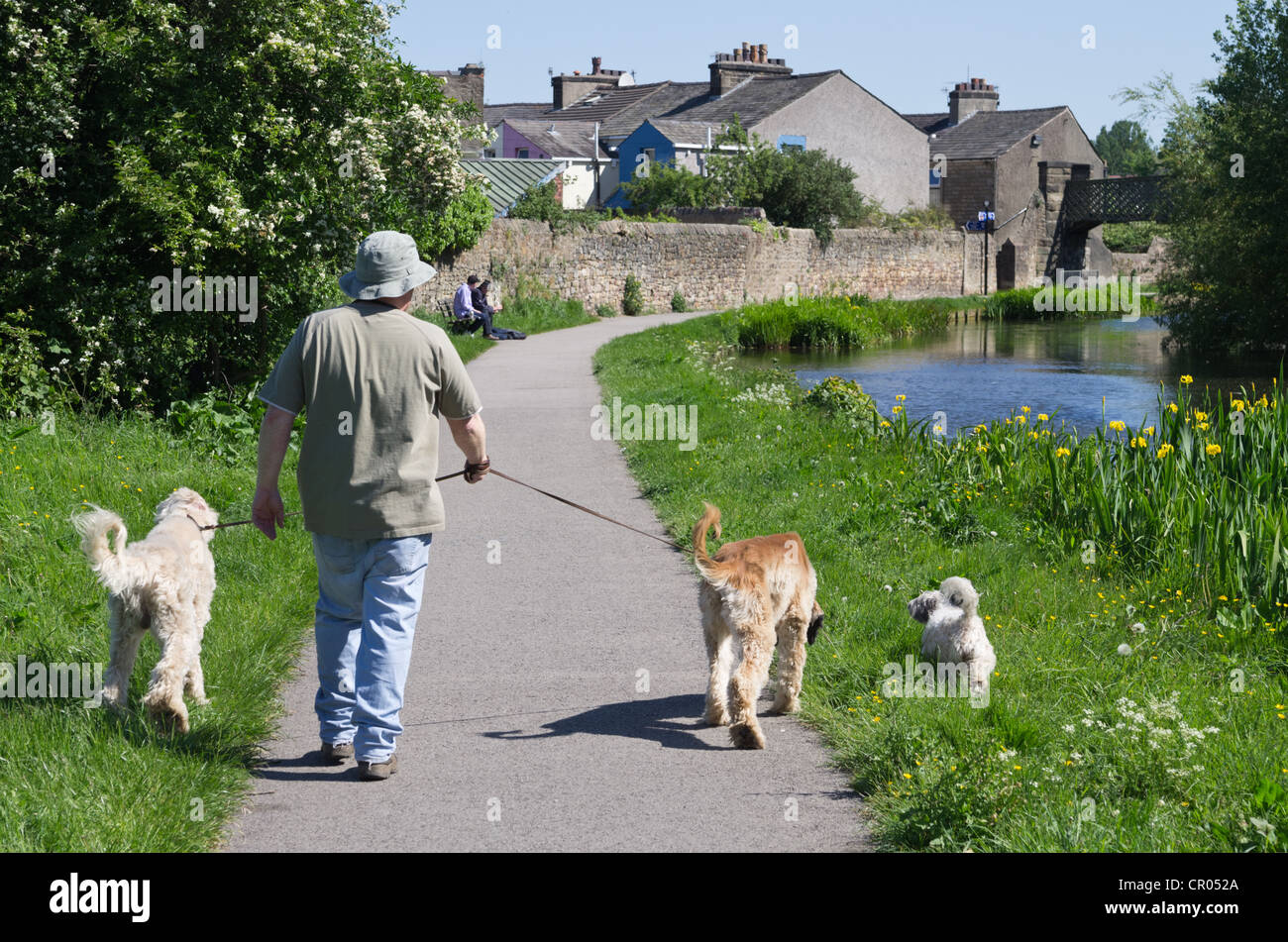 A view loking north along the towpath of the Lancaster Canal in the centre of Lancaster - Stock Image