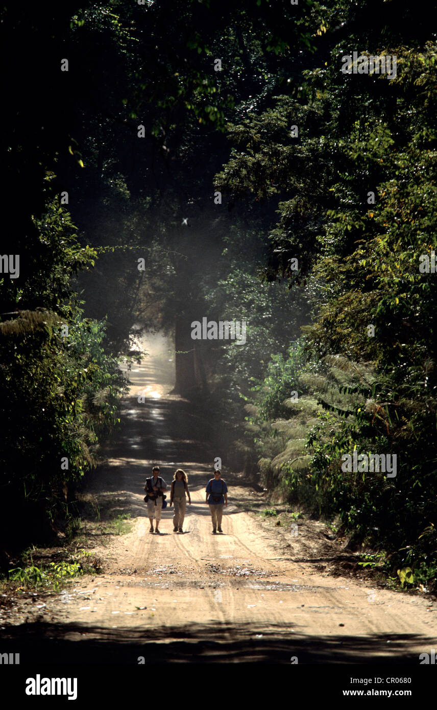 Cambodia, hiking in the jungle of Phnom Kulen - Stock Image