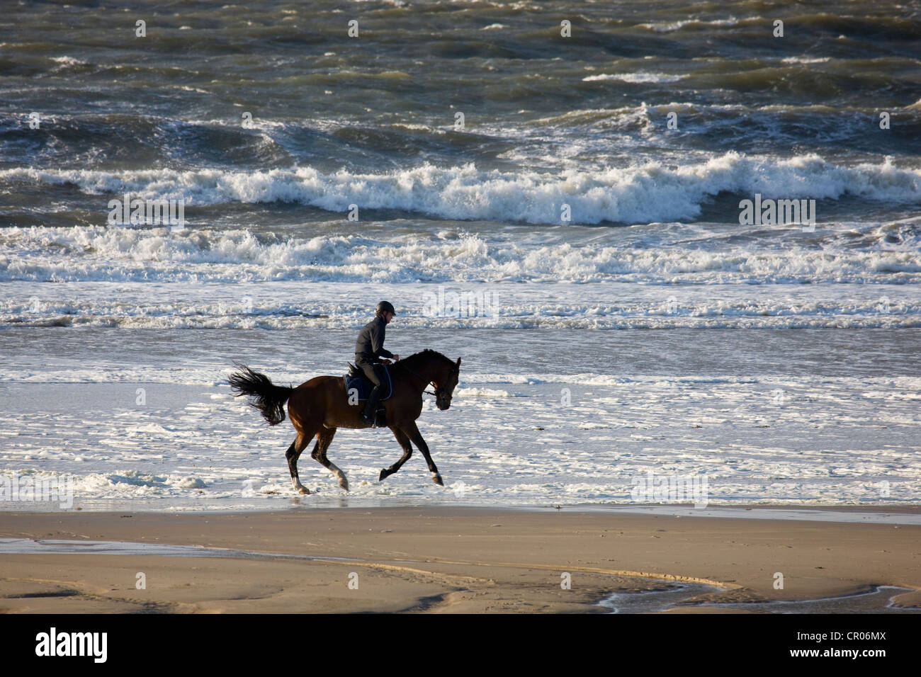 Horseman riding horse in gallop on beach along the North Sea, Belgium - Stock Image