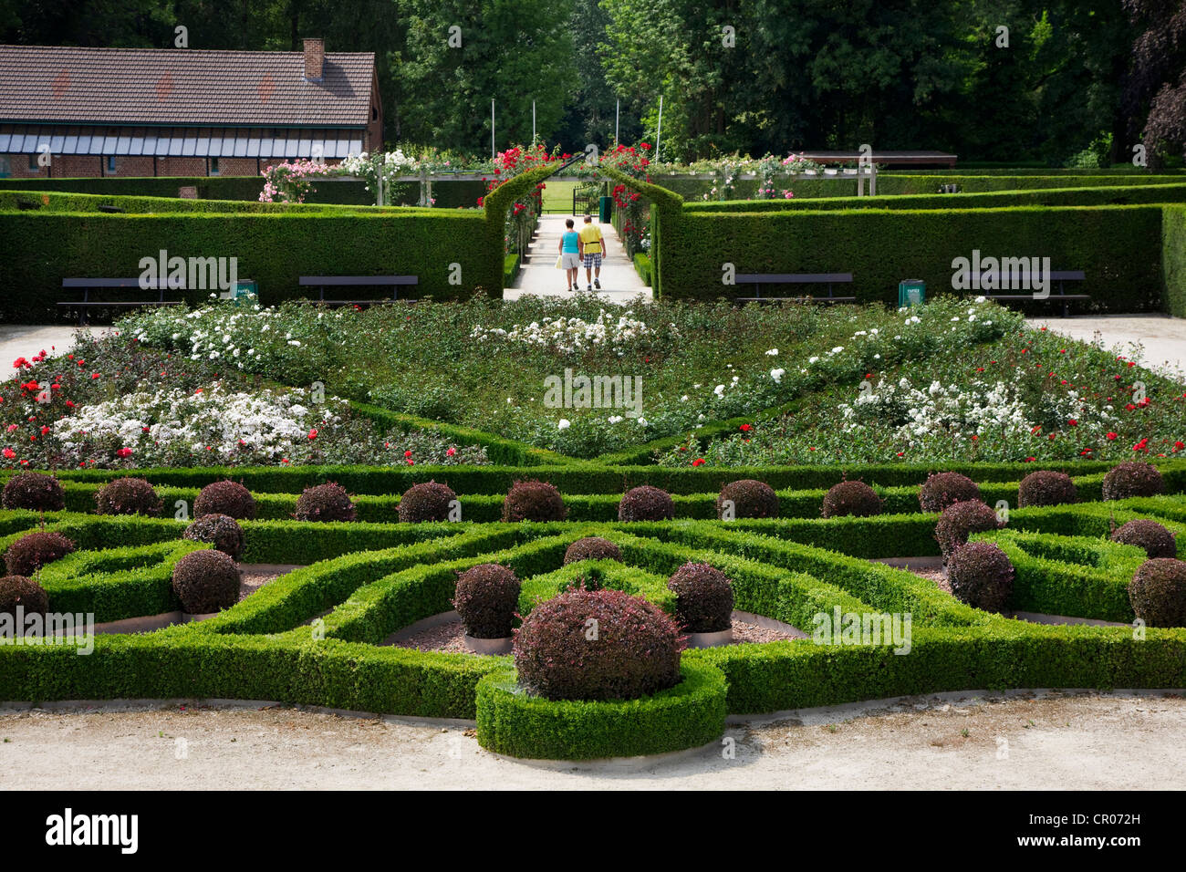 Trimmed hedges and colourful roses in the rose garden of Park Coloma at Sint-Pieters-Leeuw, Belgium - Stock Image
