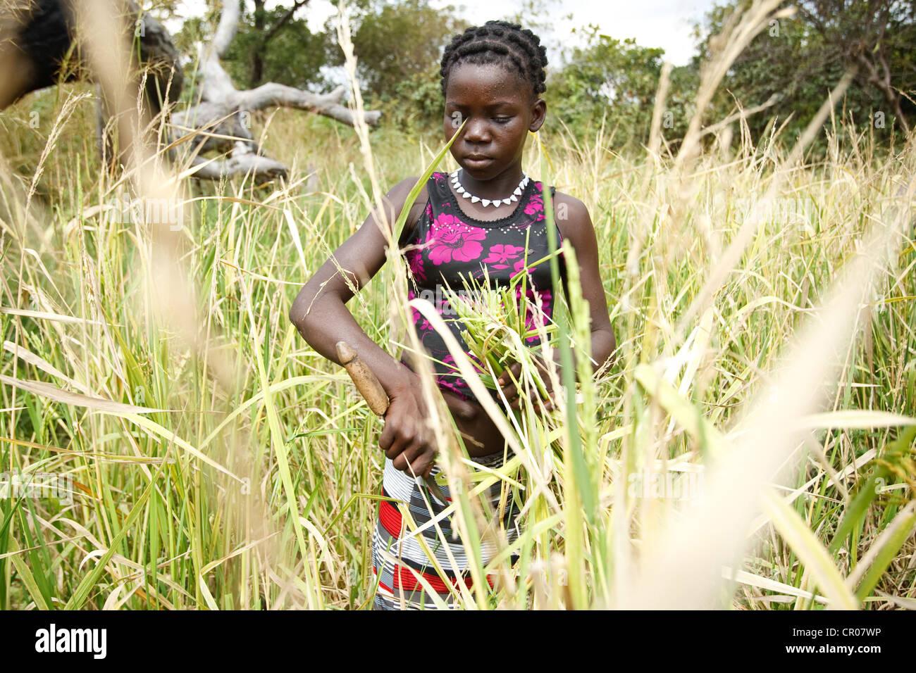 Kambou Tangba, 17, works in a rice field in the village of Kirkpadouo, Zanzan region, Cote d'Ivoire - Stock Image