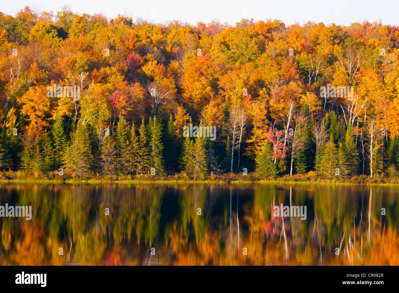 Autumnal forest and pond, South Bolton, Quebec, Canada - Stock Image
