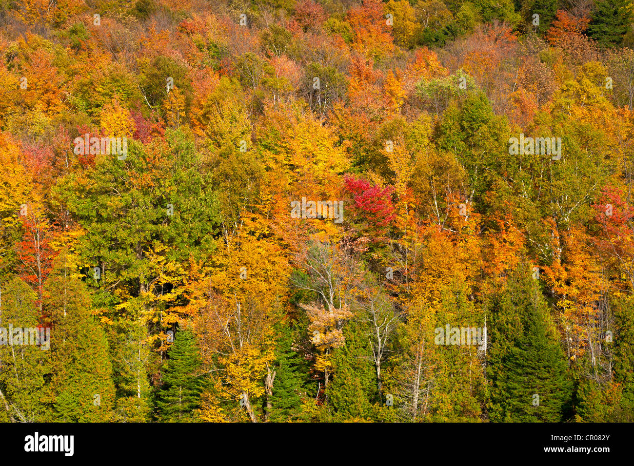 Sugarloaf Pond in autumn, Quebec, Canada - Stock Image
