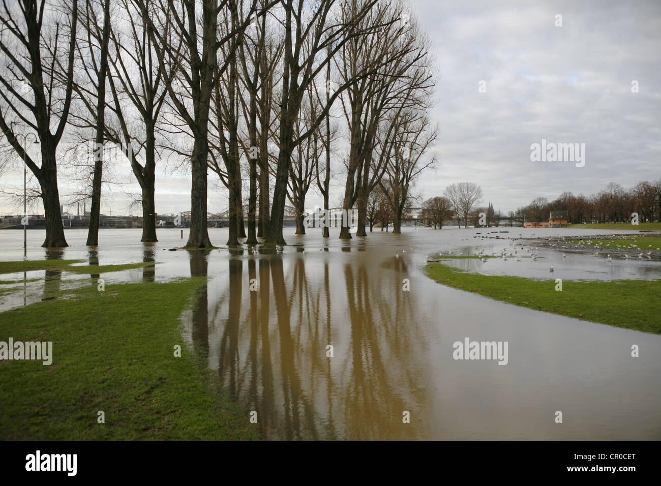 Flood, January 2011, Poller meadows, Koeln-Poll, Cologne, North Rhine-Westphalia, Germany, Europe - Stock Image