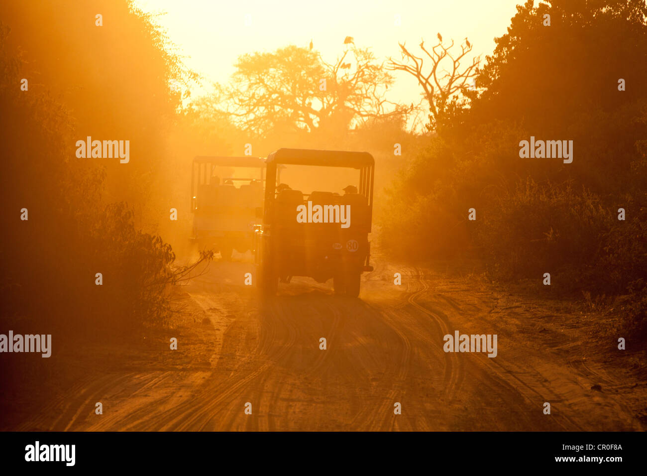 Jeep driving in the road in a Safari - Stock Image