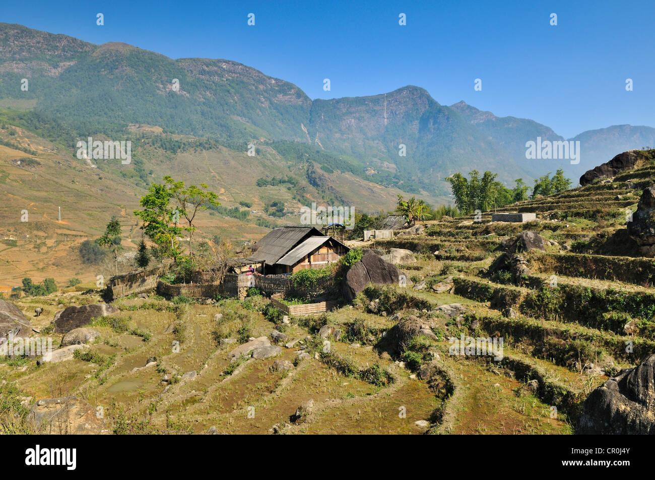 Houses, rice farmers, rice terraces, rice paddies near Sapa, Sa Pa, Lao Cai province, northern Vietnam, Vietnam, - Stock Image