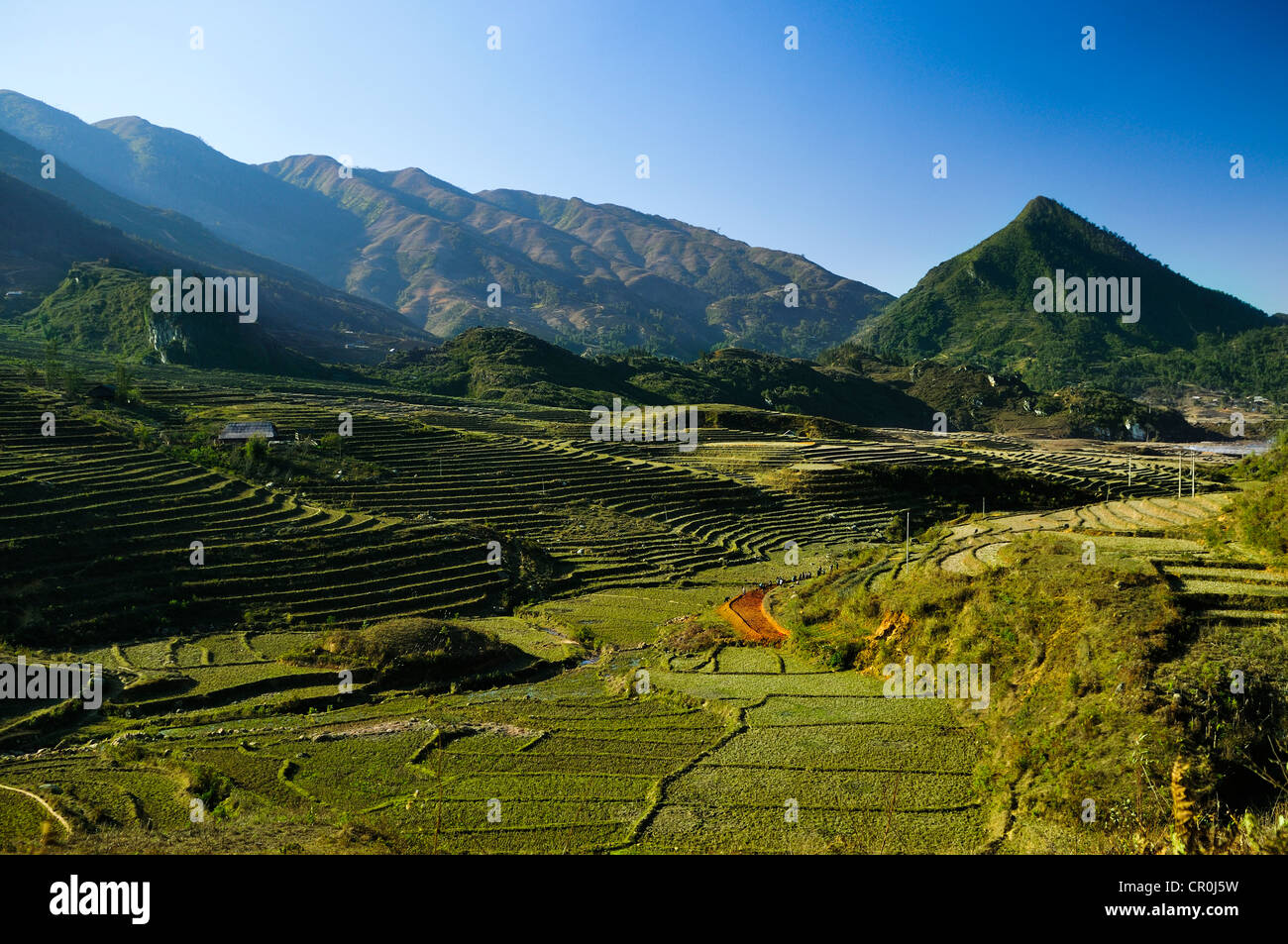 New terrace, rice terraces, rice paddies in Sapa or Sa Pa, Lao Cai province, northern Vietnam, Vietnam, Southeast - Stock Image