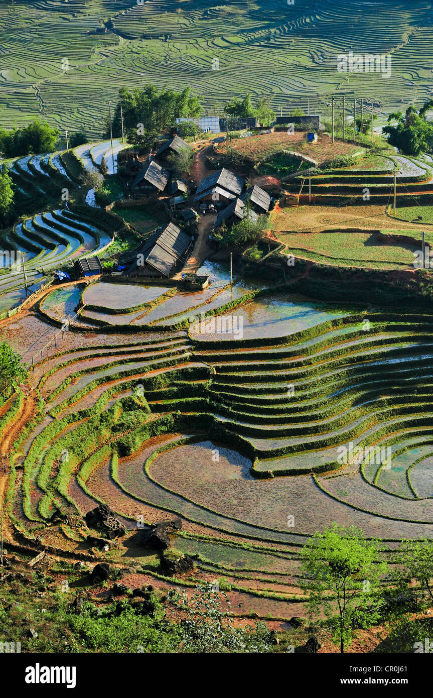 Houses, rice farmers, green rice terraces, rice paddies in Sapa or Sa Pa, Lao Cai province, northern Vietnam, Vietnam - Stock Image