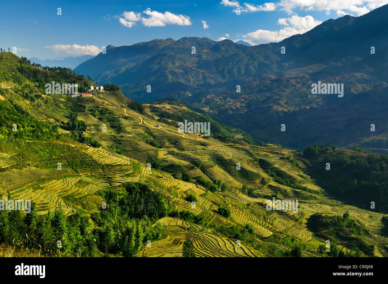 Green rice terraces, rice paddies in Sapa or Sa Pa, Lao Cai province, northern Vietnam, Vietnam, Southeast Asia, Stock Photo