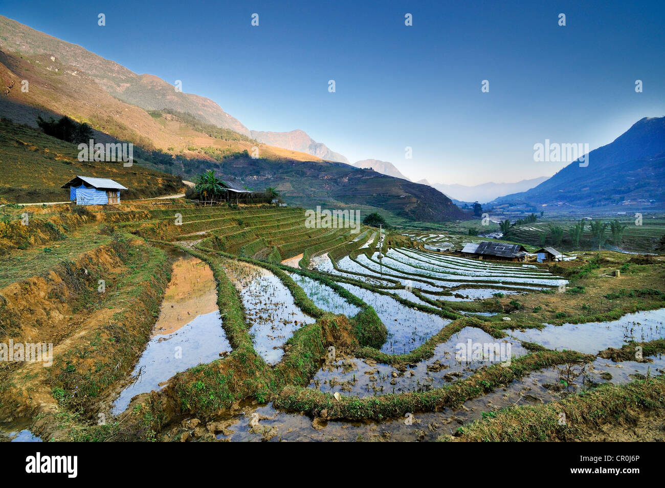 Irrigated rice terraces, rice paddies in Sapa or Sa Pa, Lao Cai province, northern Vietnam, Vietnam, Southeast Asia, - Stock Image