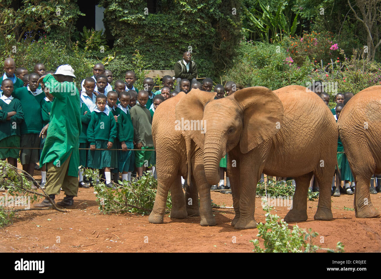 Elephant keeper talking to school children-orphaned elephants standing nearby - Stock Image