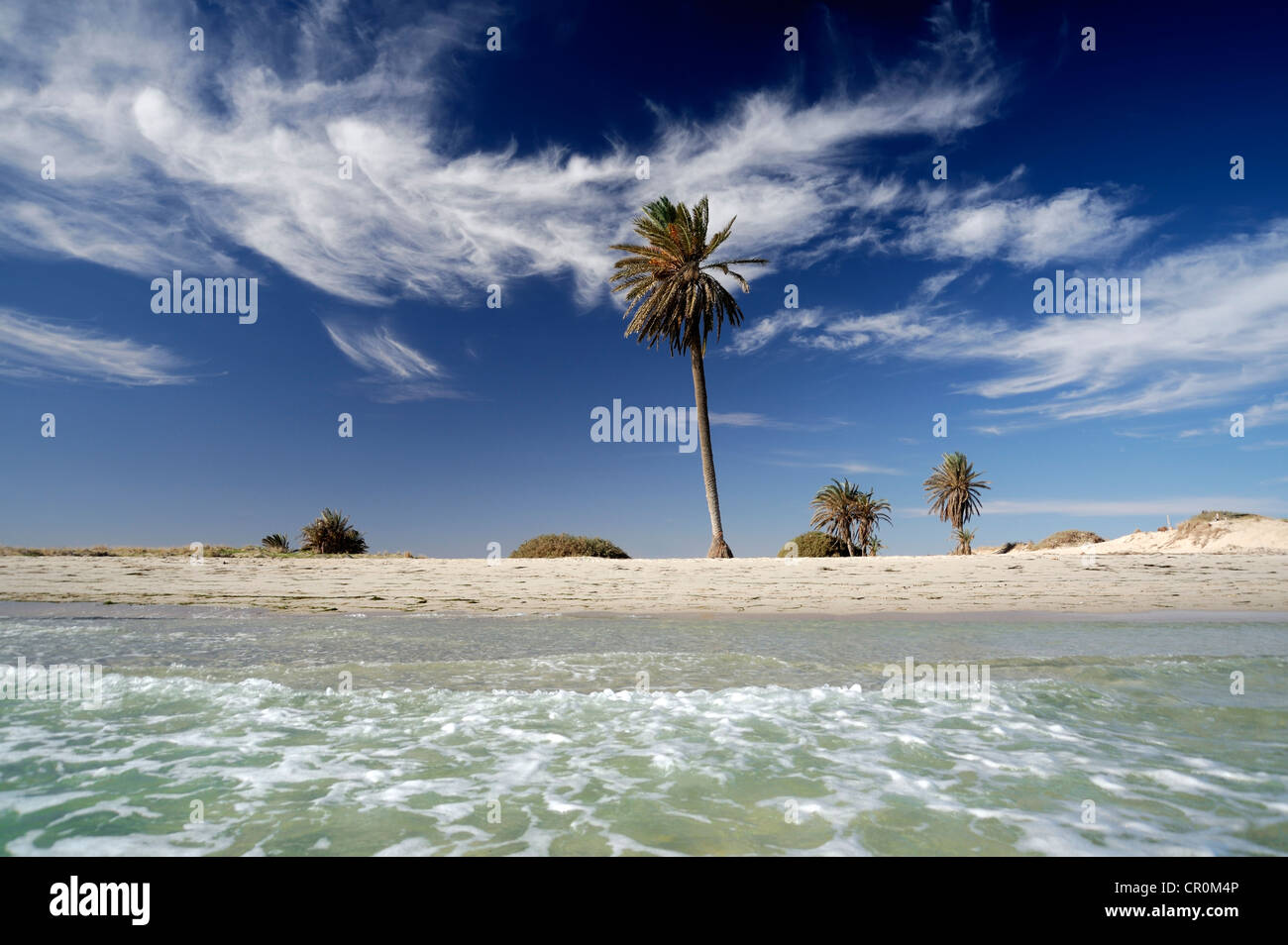 Palms on the beach, Djerba island, Tunisia, Maghreb, North Africa, Africa - Stock Image