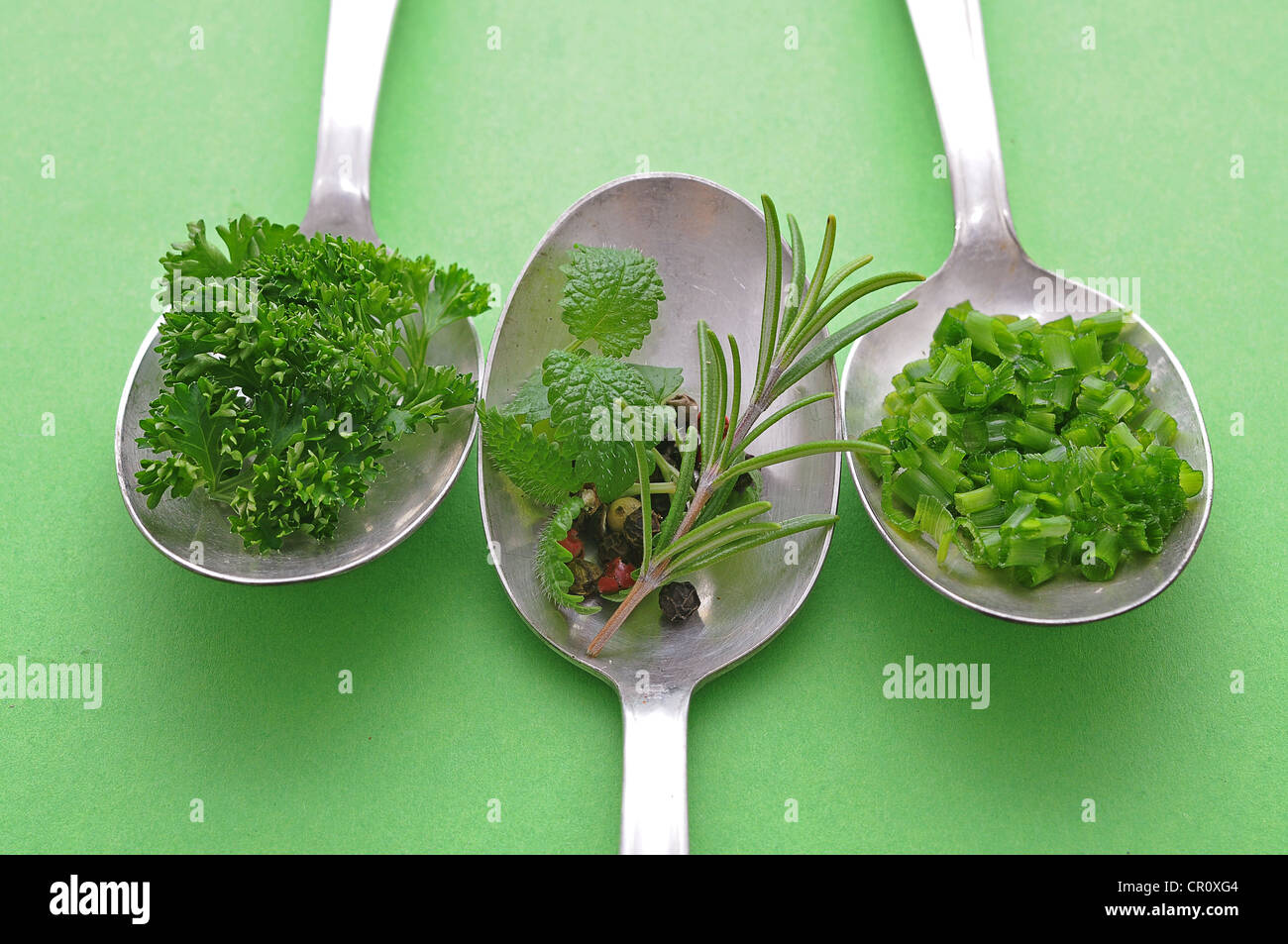 Culinary herbs and spices on old spoons, chives, rosemary, parsley, pepper, mint - Stock Image