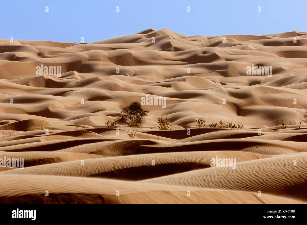 Mauritania, Adrar Region, Akjoujt, landscape of dunes, erg, and its vegetation in the desert of Amatlich - Stock Image