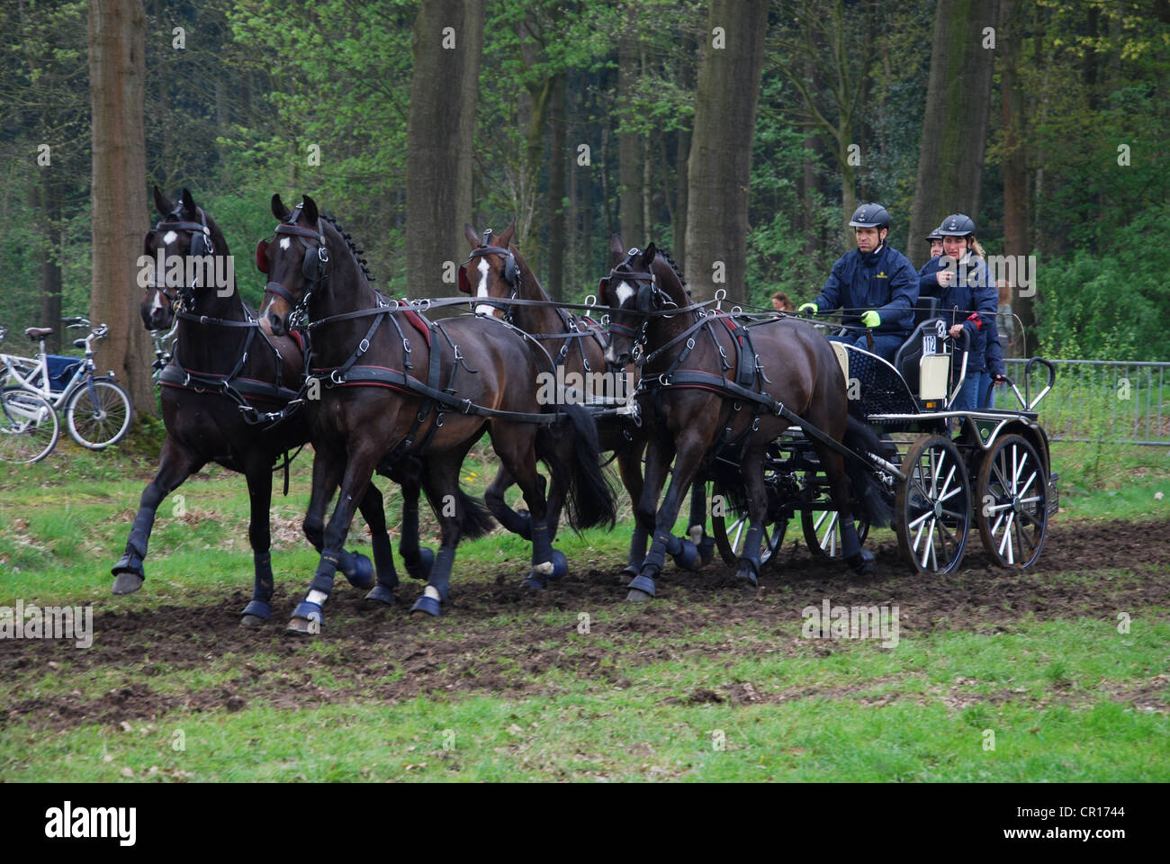 Carriage racing championship in Horst Netherlands - Stock Image
