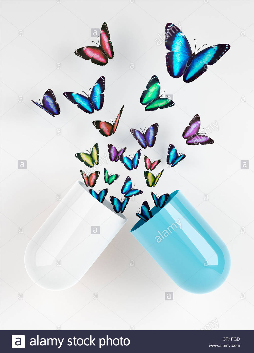Butterflies emerging from capsule Stock Photo