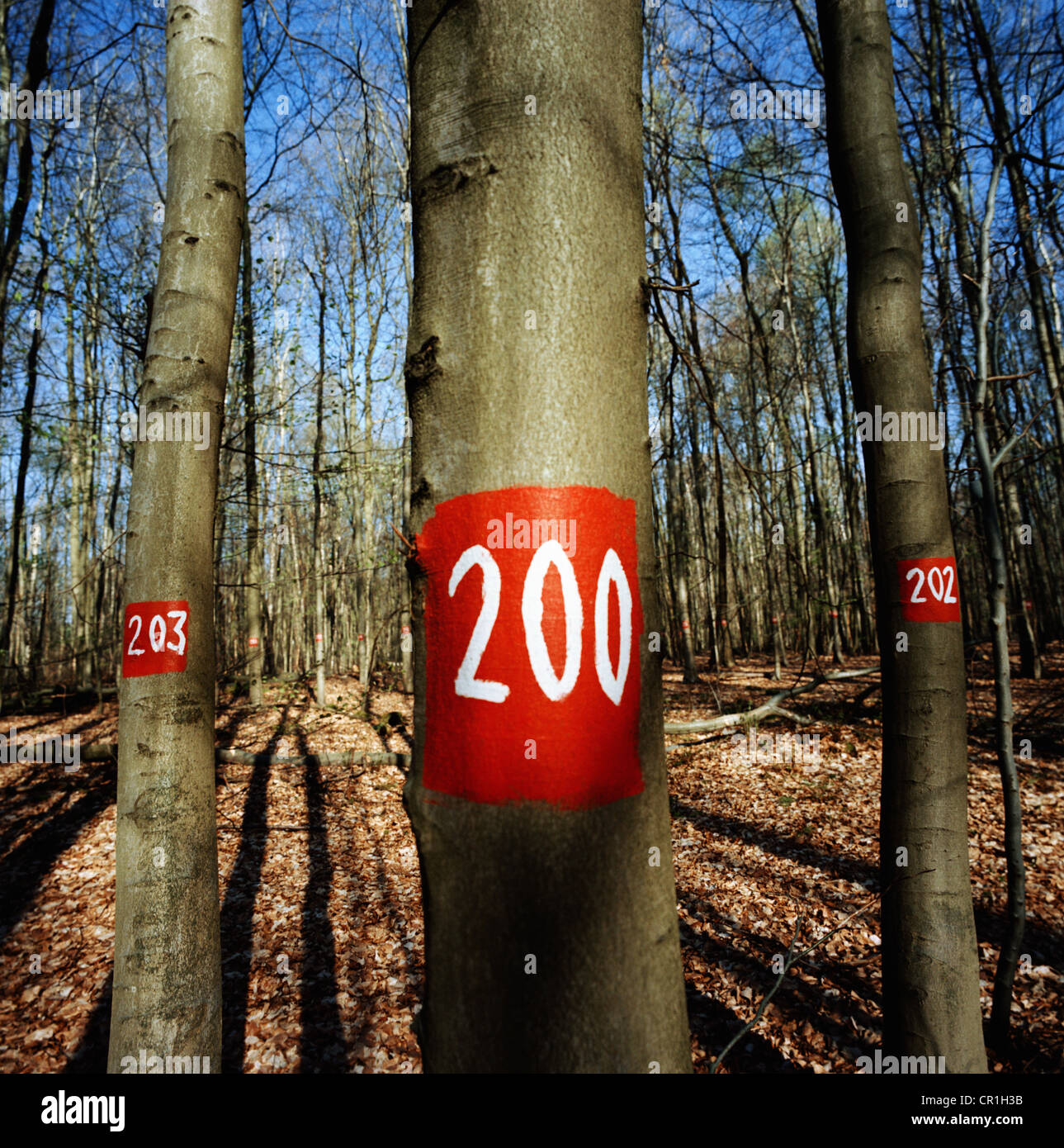 Painted numbers on trees in forest Stock Photo