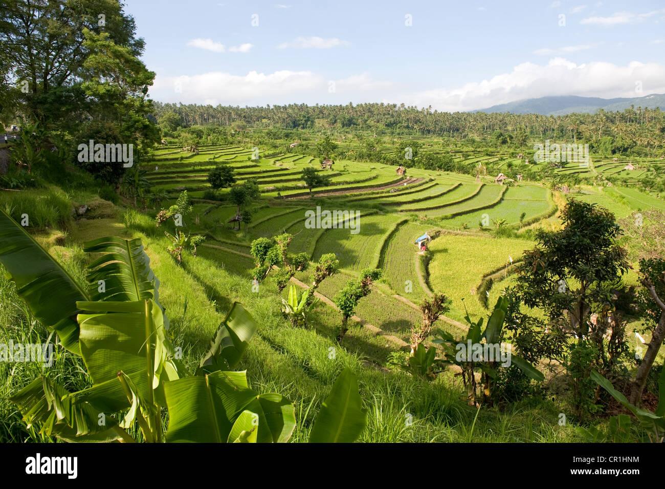 Indonesia, Bali, Subak irrigation system, UNESCO World Heritage, rice fields of Tirtagangga - Stock Image