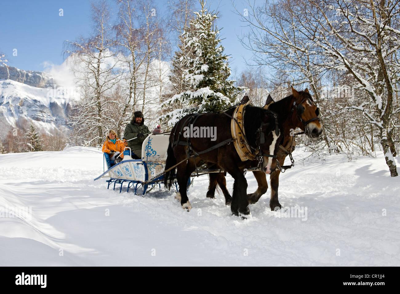 France, Savoie, la Feclaz, massif des Bauges, sleigh trip - Stock Image