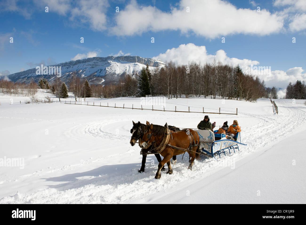 France, Savoie, la Feclaz, massif des Bauges, sleigh trip, Mont de Margeriaz 1845m - Stock Image