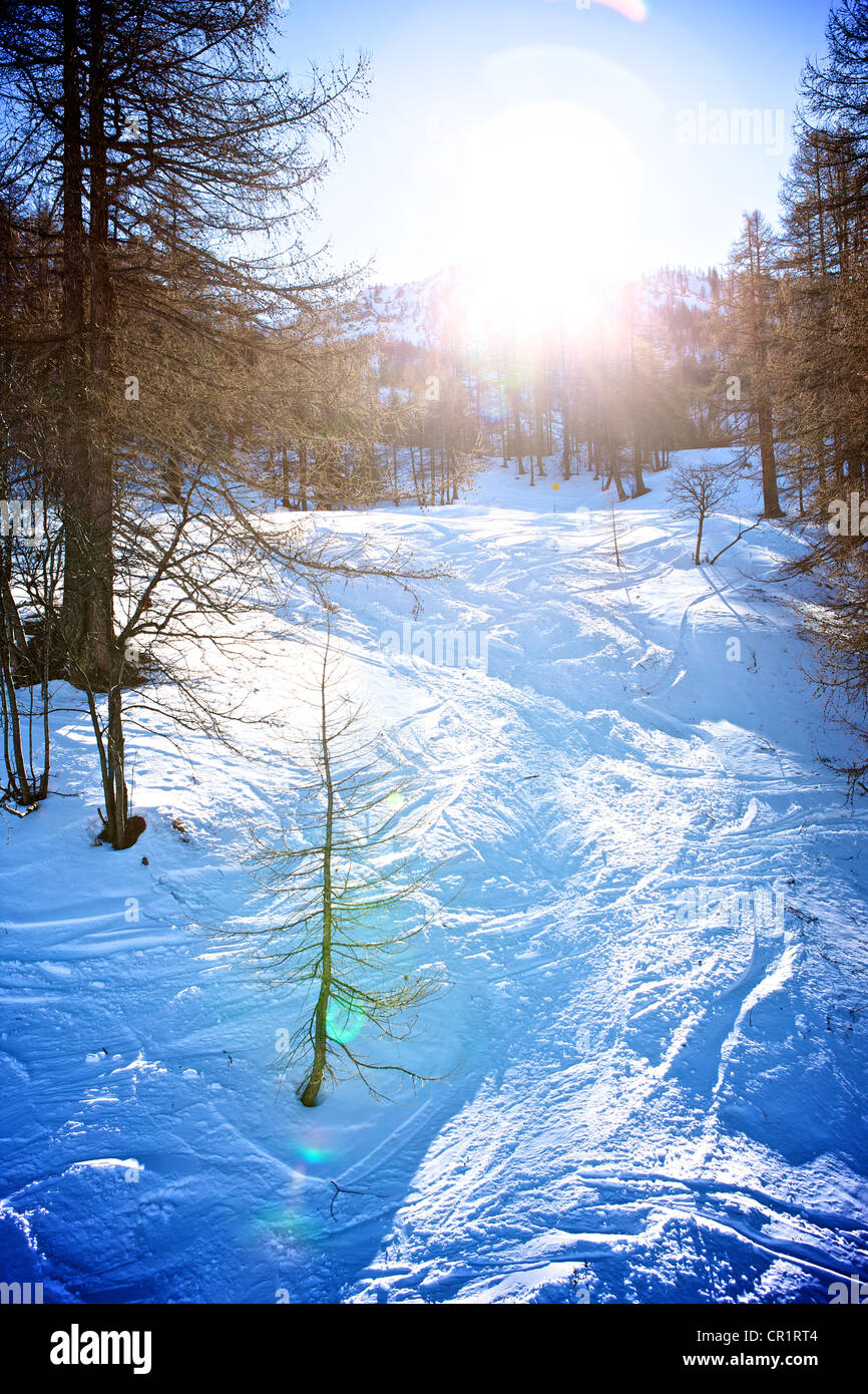 off piste ski run through trees in Bardonecchia Italy Stock Photo
