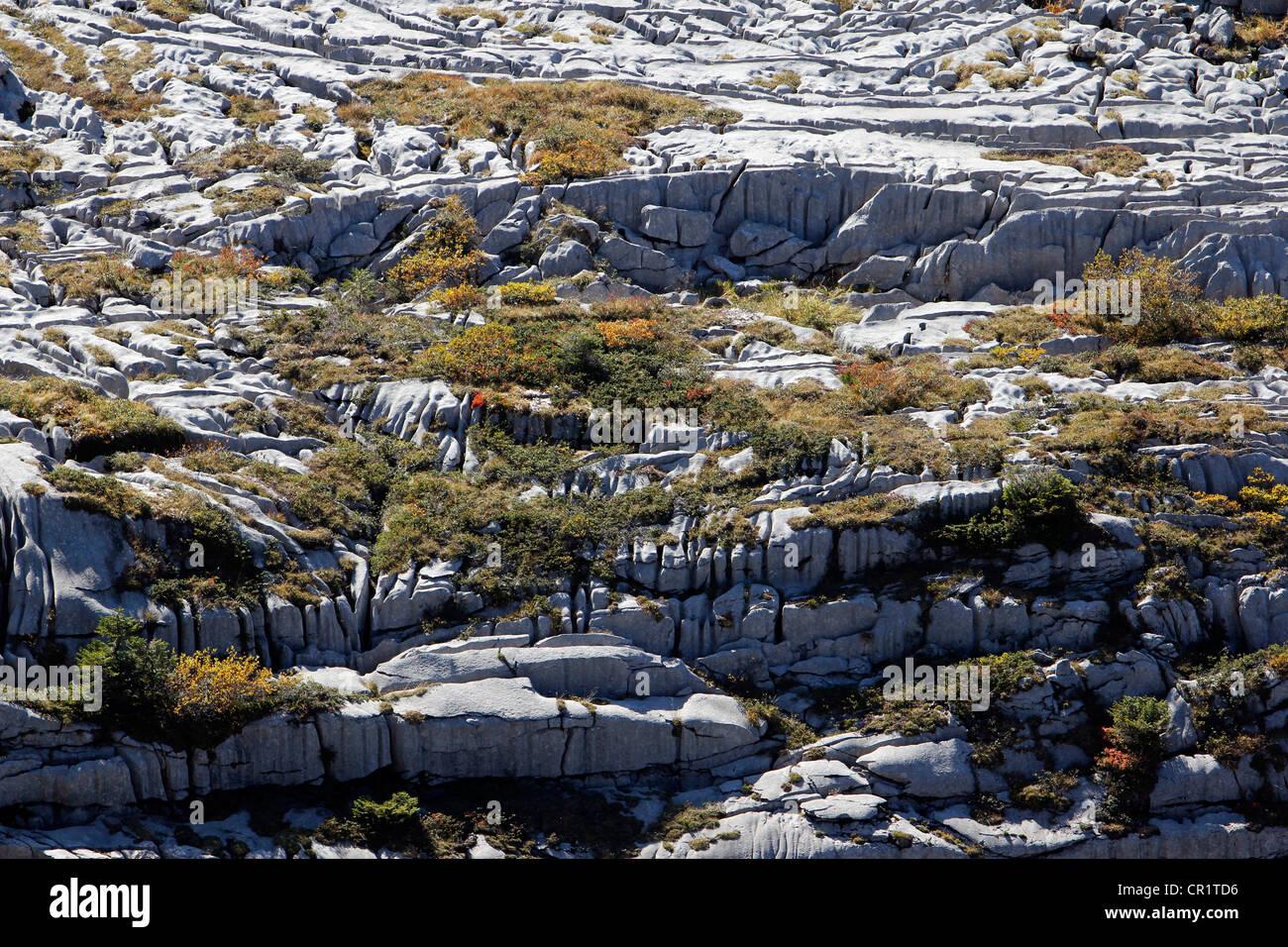 Limestone pavements, karst landforms, geology on Gamser Rugg Mountain, Toggenburg, Canton of St. Gallen, Switzerland, - Stock Image