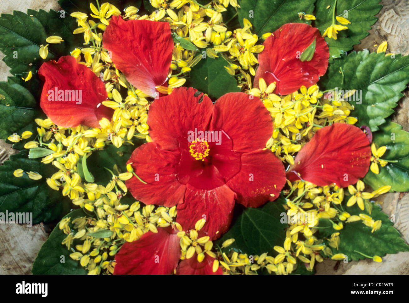 Mauritius Flower Arrangement Based On Hibiscus Flower Stock Photo