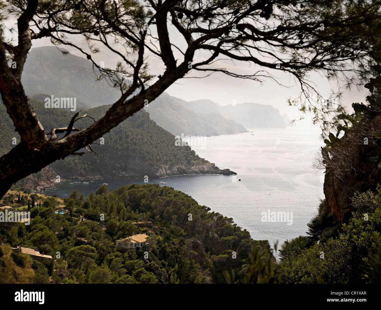 Trees on hilly rural coastline - Stock Image