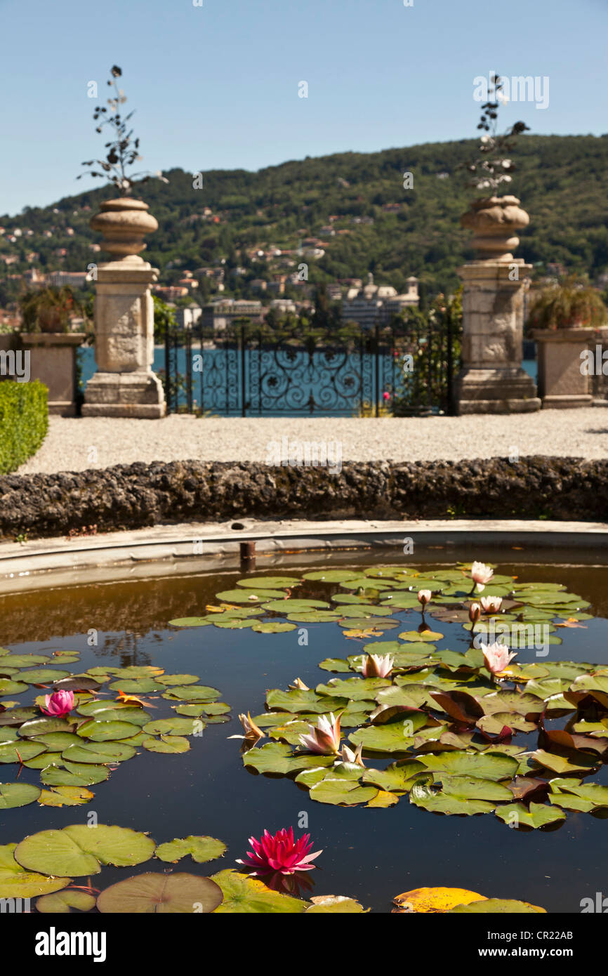 Lily pads in ornate fountain - Stock Image