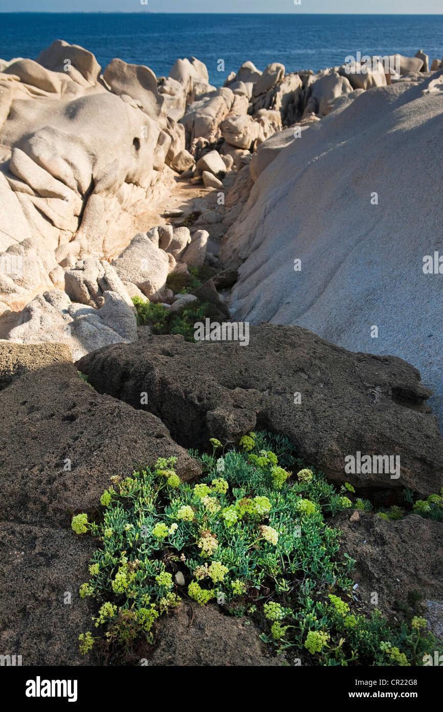 Plants growing in rock formations Stock Photo