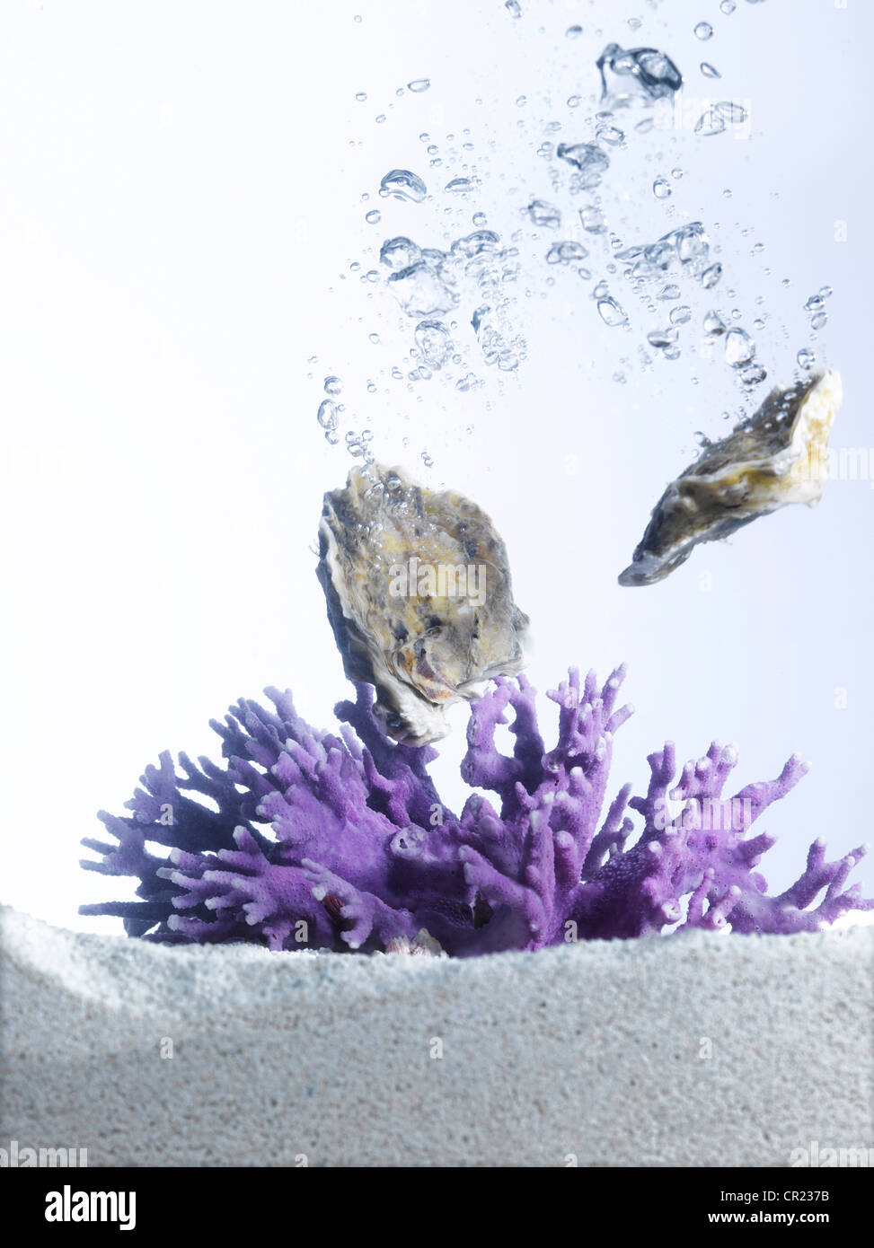 oysters in water with purple coral - Stock Image