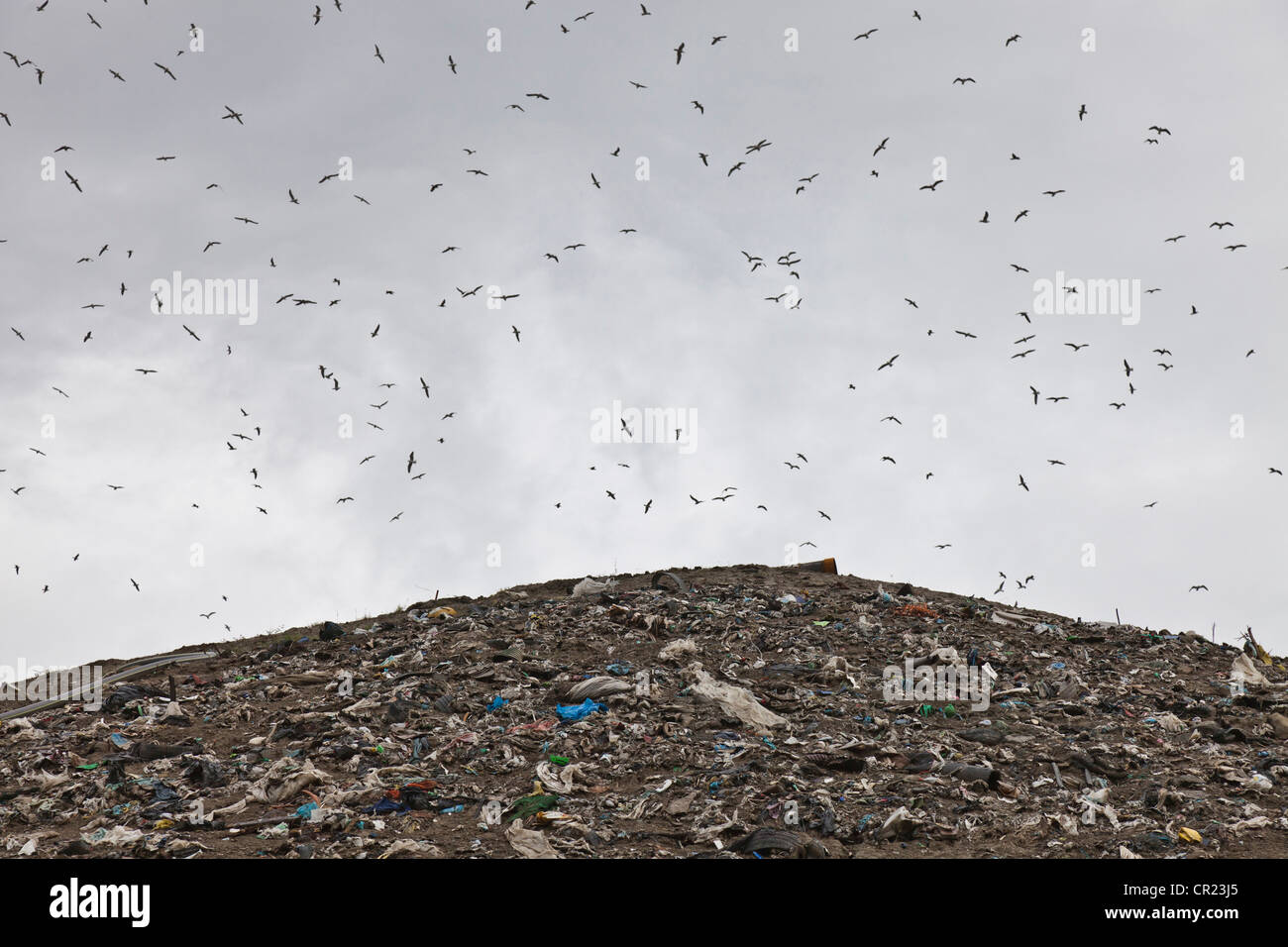 Birds circling garbage collection center - Stock Image