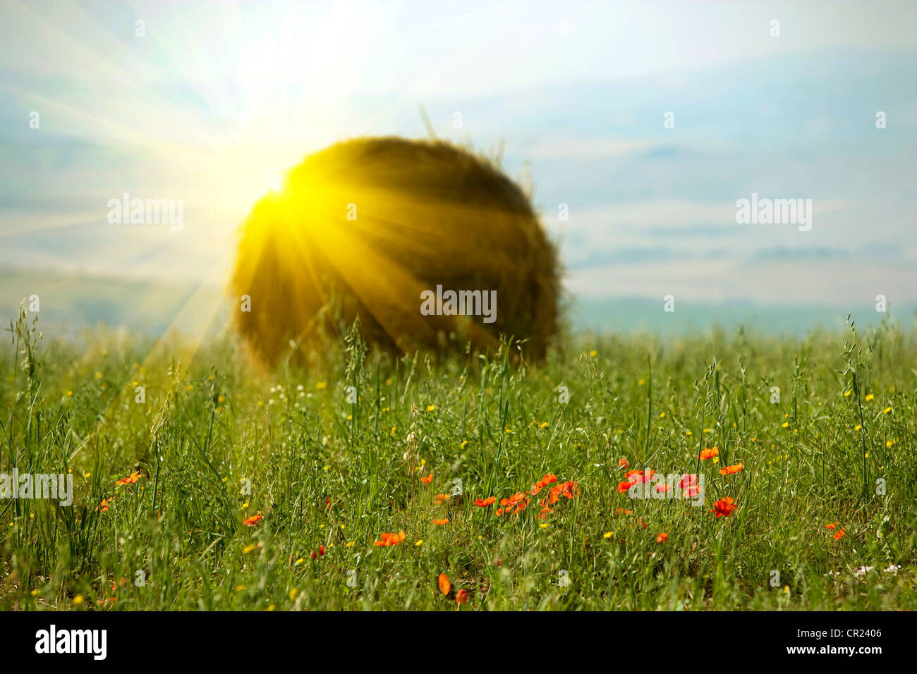 Sun shining over haybale in wheatfield - Stock Image