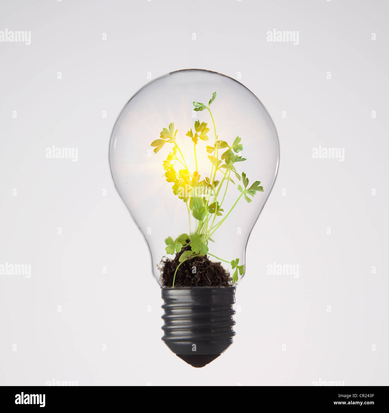 Plants growing in light bulb - Stock Image