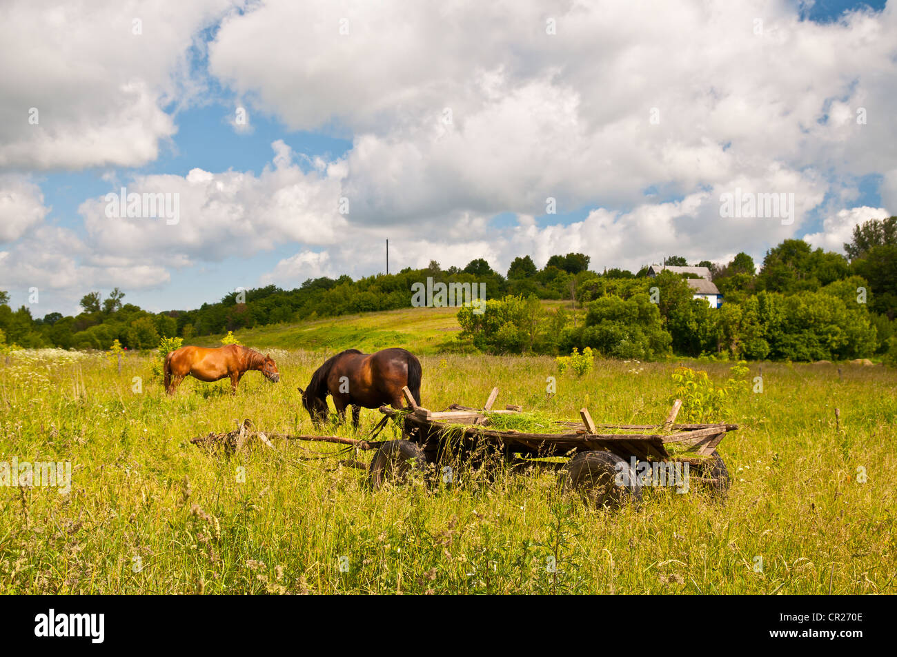 Grazing horses and traditional Ukrainian wagon in the foreground, between Kiev and Chernobyl, Ukraine - Stock Image