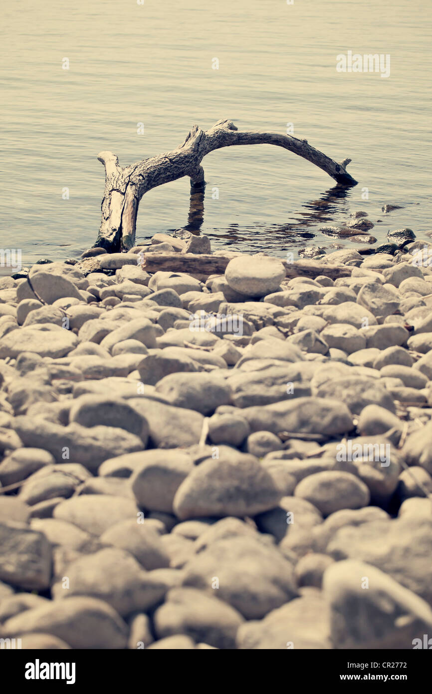 a piece of driftwood on the shore of a lake - Stock Image