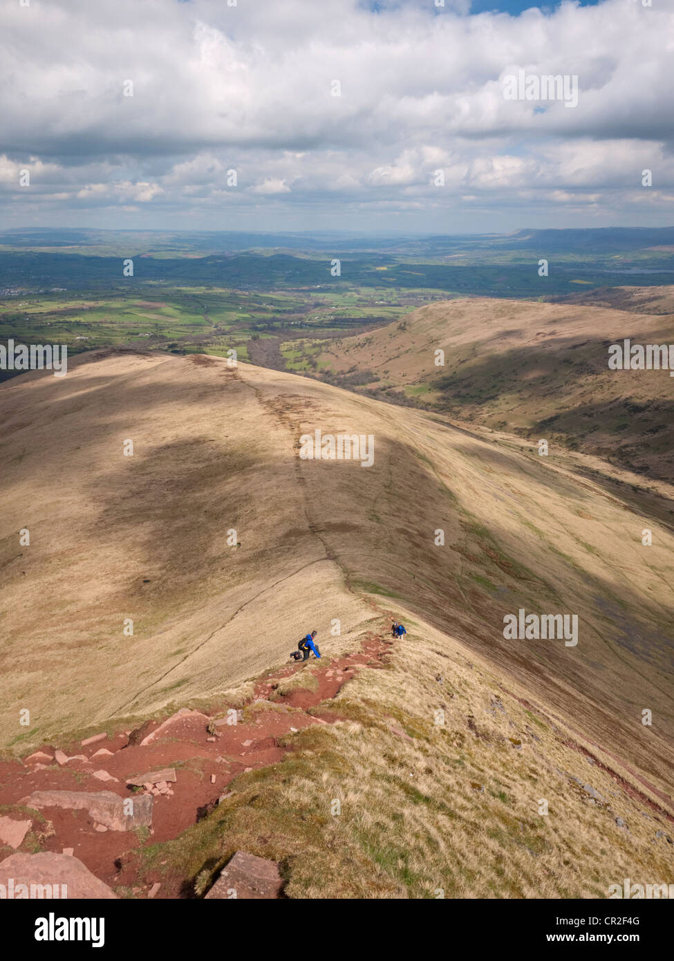 Walkers clamber up the steep ridge of Bryn Teg, towards the summit of Cribyn in the Brecon Beacons National Park - Stock Image
