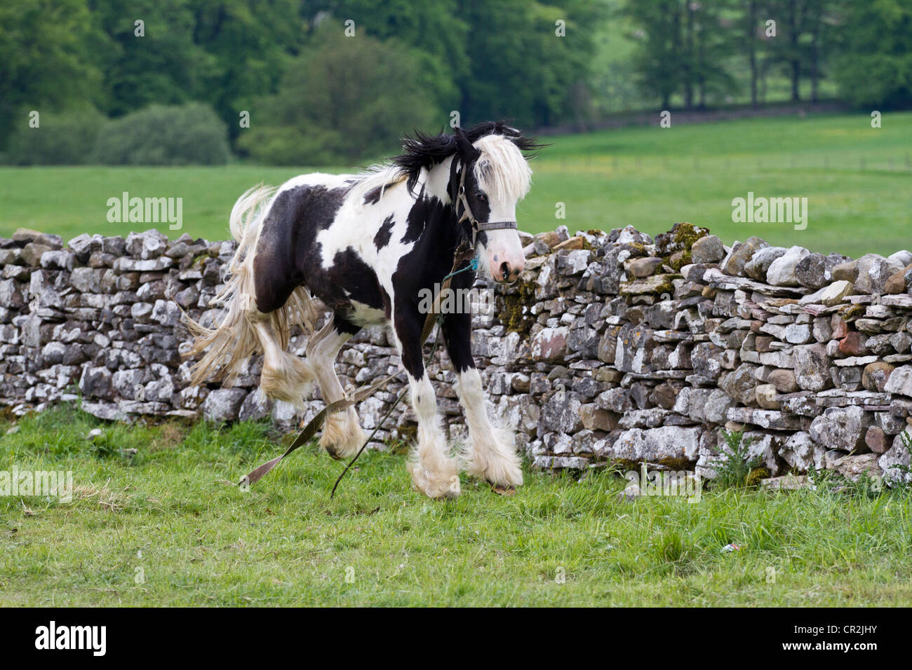 Fell End, Sedbergh. A traveller's camp  Attending the annual Appleby Horse Fair, Cumbria, UK Stock Photo