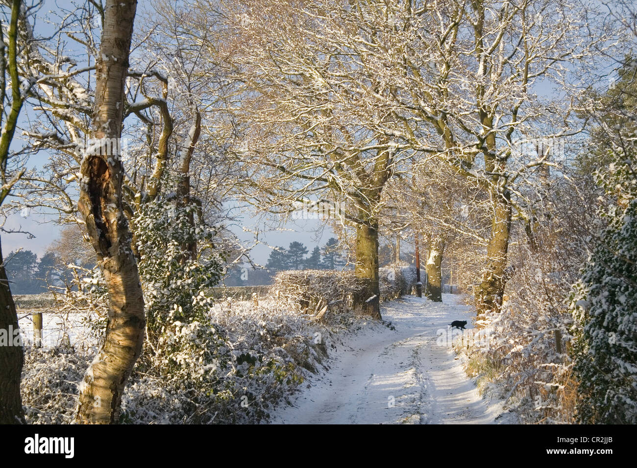 Frosty Tree Scene in Winter in Cheshire - Stock Image