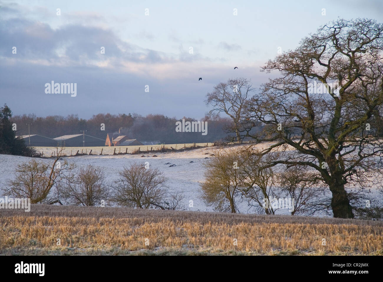 Beautiful Winter Sunshine Over Cheshire Fields - Stock Image