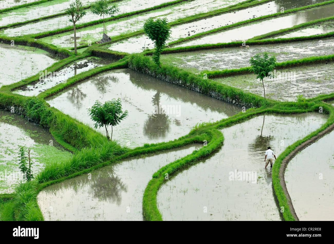Tirtaganggaa rice terraces, Bali, Indonesia, Asia - Stock Image