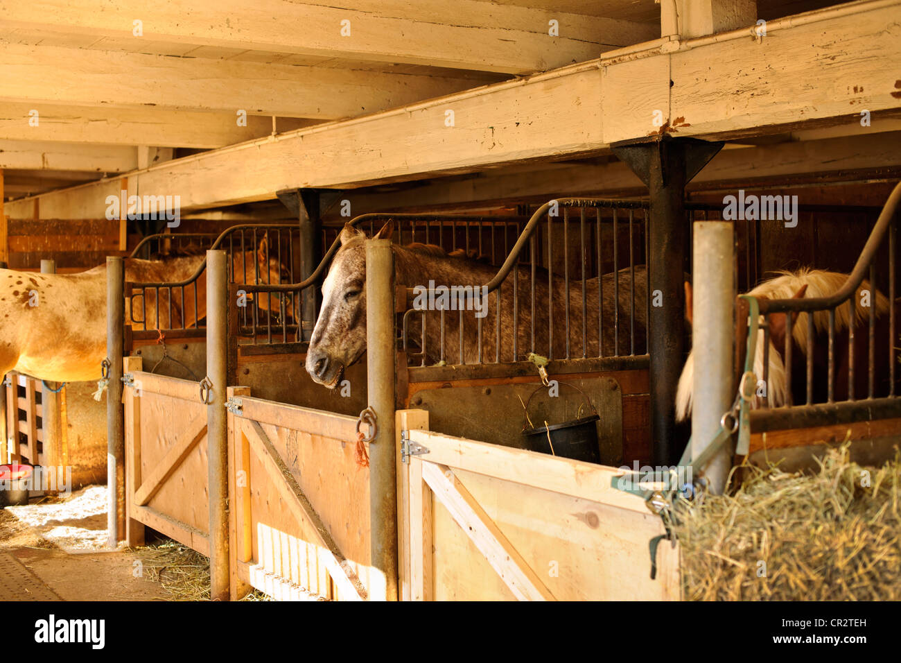 Horse stables with wooden doors and horses - Stock Image