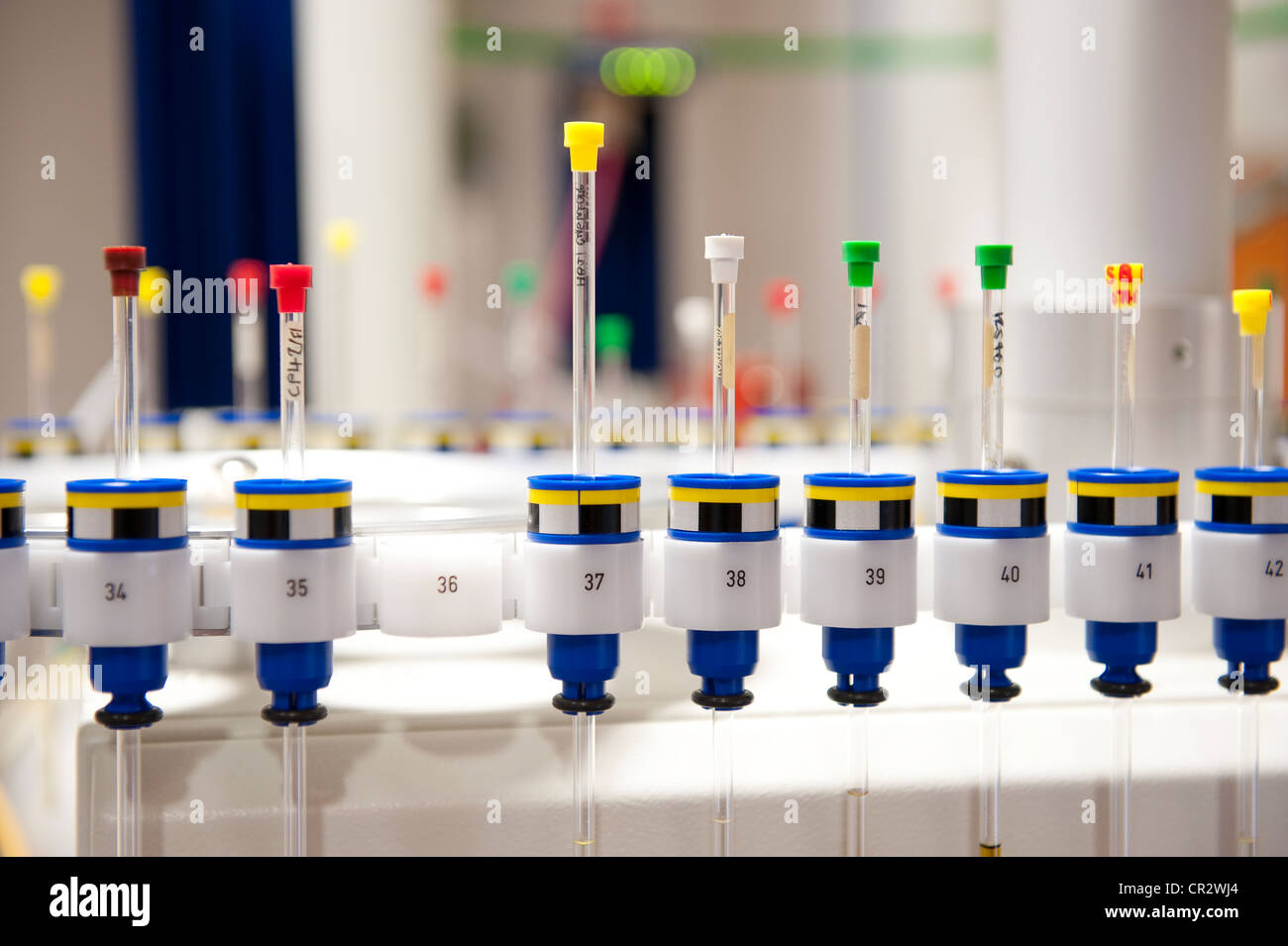 glass test tubes vials in chemistry laboratory - Stock Image