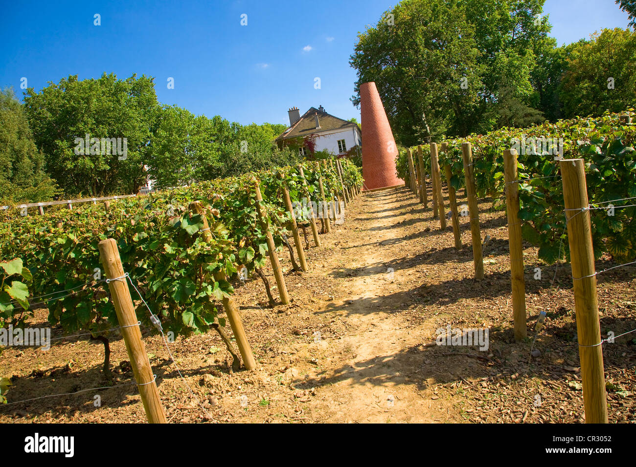 France, Paris, vineyards in the Bercy Park - Stock Image