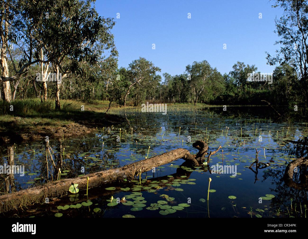 Australia, Northern Territory, Litchfield National Park, billabong, marshland - Stock Image