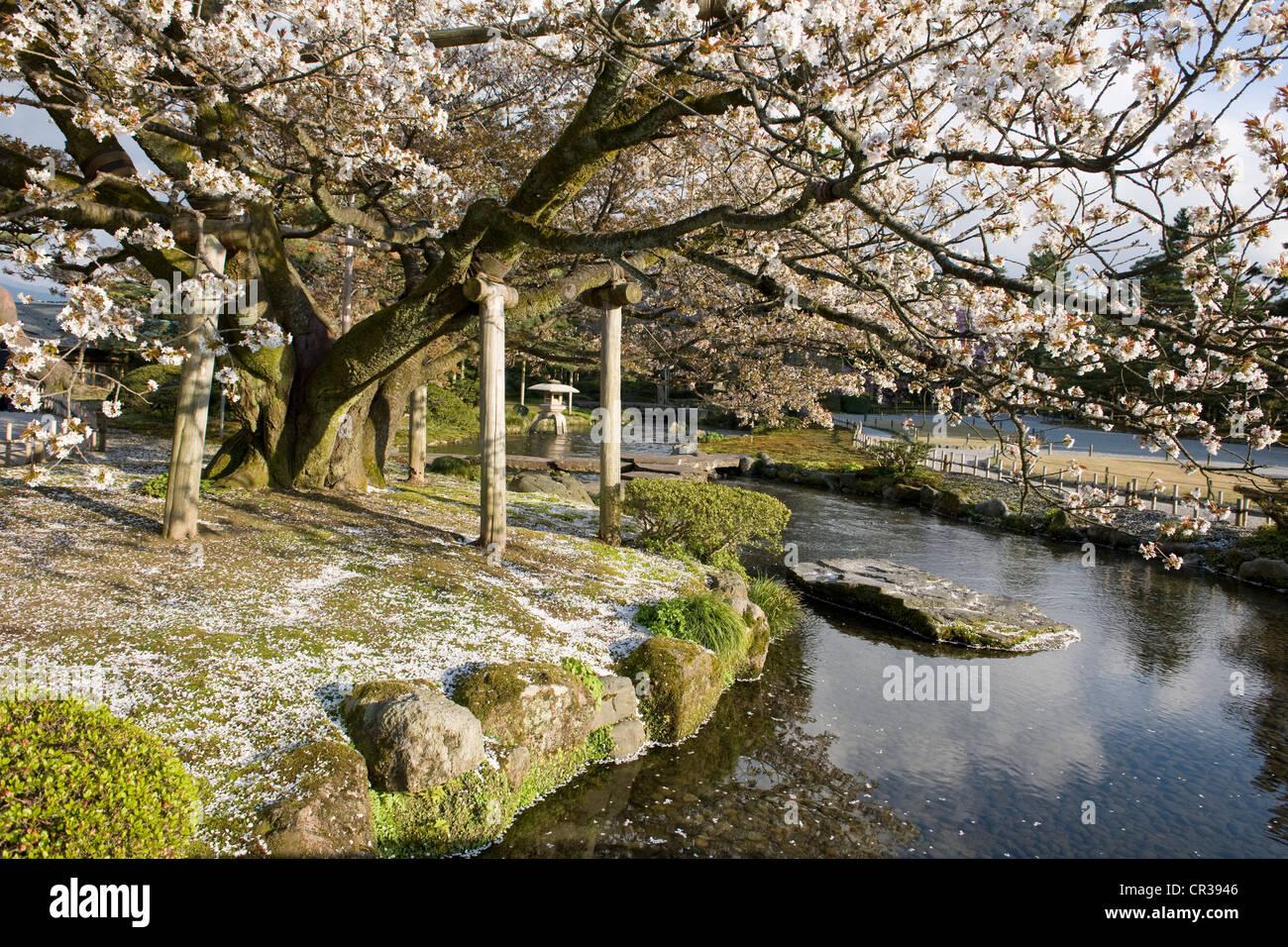 Japan, Honshu Island, Chubu Region, Kanazawa, the Kenroku En Garden - Stock Image